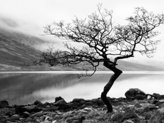 Solitary Tree on the Shore of Loch Etive, Highlands, Scotland, UK Photographic Print at AllPosters.com
