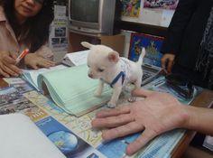 Awwwww......a Mini Puppy!! I love animals, even teeny tiny ones!!