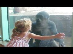 Little Girl and Baby Gorilla Become Friends - YouTube