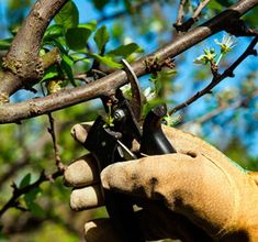 Cuidados de la hortensia - ¡LA GUÍA MÁS COMPLETA! Gardens, Take Care, Growing Plants, Iron Wall Decor, Homemade Insecticide, Natural Bug Killer, Bamboo Fence, Plants