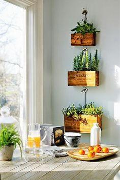 decorar la cocina con plantitas para consumir?? me tengo q acordar de regarlas...