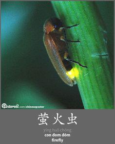 萤火虫 - Yíng huǒ chóng - con đom đóm - firefly