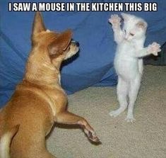 20 Funny Animal Pictures Of The Day 20 lustige Tierbilder des Tages – lustige Tiere – täglich LOL Pics Funny Animal Jokes, Funny Dog Memes, Cute Memes, Cute Funny Animals, Funny Cats, Memes Humor, Funny Quotes, Cute Animal Humor, Funniest Animals