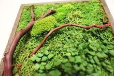 """12"""" x 36"""" Artisan Moss Moss Wall Art. Plant Painting- No Care Green Wall Art. Real Preserved Plants, Reclaimed Wood. Moss and Fern Art."""
