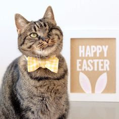 Happy Easter! It's the last day to order any accessory with a 15% discount!! Use code easter.  www.catinberlin.com by catinberlin