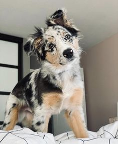 Super Cute Puppies, Baby Animals Super Cute, Cute Baby Dogs, Cute Little Puppies, Cute Dogs And Puppies, Cute Little Animals, Cute Funny Animals, Doggies, Baby Animals Pictures
