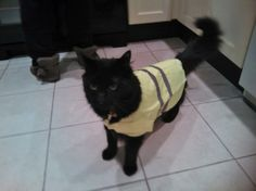 FinBow The Cat - Aprils Funny Pets Winner.