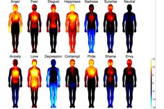 A team of biomedical engineers has mapped the bodily reactions to emotions in 700 individuals and found that patterns were the same all around the world.