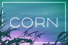 Corn - A clean font with style by phitradesign on @creativemarket
