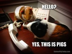 Angela, Editor-in-Chief, GPT | Guinea Pig Today