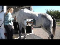 How to Teach Your Horse to Walk Into the Trailer on its own