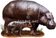 Full color illustration of a Pygmy Hippopotamus and a calf (Choeropsis liberiensis)
