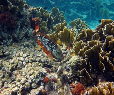Bonaire Snorkeling - How Good Is It?