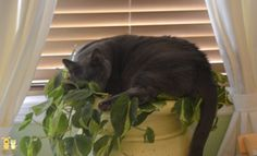 Gordy sleeping in the plant stand.
