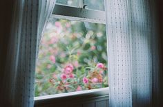 ...View of my flowers from a window in my cottage
