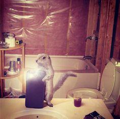Diomedia x National Geographic Wildlife Selfies