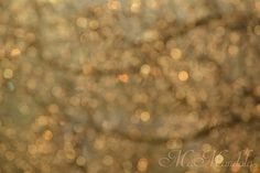 MaMandala, art, inspiration, light, shadow, nature, structures, circle, gold, tree, branch, leaves, autumn, dreamy, fuzzy