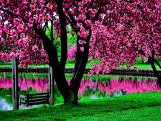 flores lindas
