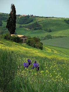 Siena, Italy - Orcia Valley