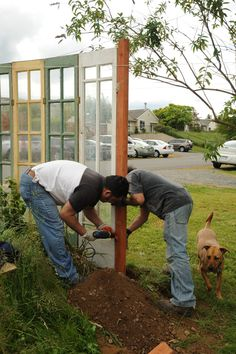Screwing together the funky part of a fence, reusing glass doors from a greenhouse, Jose and Tito, with Rosie helping in foreground, Broadview duplex, Seattle, Washington, USA | by Wonderlane
