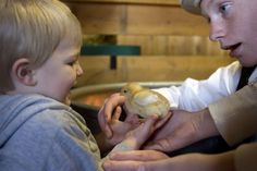 (Kim Raff  |  The Salt Lake Tribune)  (left) Hudson Peck holds a baby chick with the help of volunteer (right) Keegan Tureson in the Savage Livery Stable during Baby Animal Season at This is the Place Heritage Park in Salt Lake City on April 1, 2013. The event will continue until May 24.