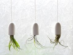 DIY Hanging Air Plant Container