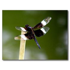 Black Dragonfly Post Cards