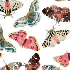 Types Of Moths, Learn A New Skill, Insect Art, Shrinky Dinks, Custom Fabric, Spoonflower, Craft Projects, Quilting, Fabrics
