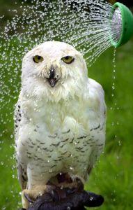 Uil-owl