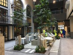 Menlyn Maine is a new shopping centre in Pretoria that we provided and installed interior plants for. Image shows 4 x 4m tall Trichelia trees with Zamioculcus planted around their bases.