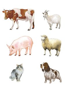 Montessori Activities, Toddler Activities, Farm Fun, Easy Drawings For Kids, Printable Animals, Kids Poster, Animal 2, Bird Drawings, African Animals