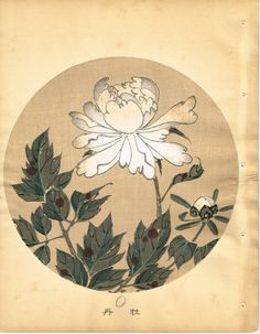 "Japanese antique woodblock print Ito Jakuchu ""Peony from Jakuchu gafu"""