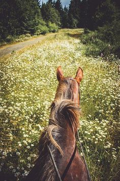 ahorsecalledtimber: Ride through flowers by Amy.Equine on Flickr.