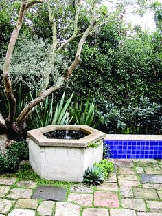 A poured-in-place aggregate water feature with sand-set hardscape and Corsican mint between the pavers.