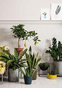 Jardim urbano. Veja mais: http://www.casadevalentina.com.br/blog/detalhes/jardim-urbano-3169 #decor #decoracao #interior #design #casa #home #house #idea #ideia #detalhes #details #style #estilo #casadevalentina