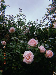 Sky Aesthetic, Flower Aesthetic, Aesthetic Iphone Wallpaper, Aesthetic Wallpapers, Tumblr Photography, Nature Photography, Flowers Nature, Beautiful Flowers, Tumblr Flower