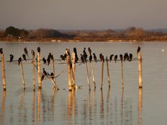 La Camargue -    Kickcan & Conkers #Camargue #water #blue #field #champs #sky #ciel #france #south #provence #Paca #tourism #tourisme #pacatourism #pacatourisme #tourismpaca #tourismepaca #provence #provencal #nature #birds #animals #animaux #oiseaux