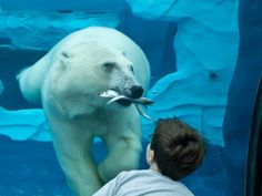Is Detroit Zoo's Arctic Ring of Life Best Exhibit in the Country?