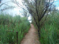 Uno dei tanti sentieri che si trovano all'nterno dell' Oasi WWF Lago di Burano - Capalbio