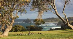 An ocean view from Narooma,on the south coast of  N.S.W.   v@e.