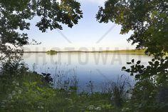 Alder Trees at the Lake - Tavlor på canvas - Photowall