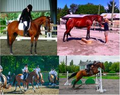Remembering When - Bay  Thoroughbred Mare in , British Columbia V6N 4G7, Canada