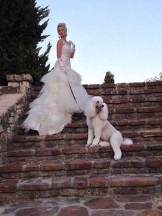 Wedding Poodle Ozzy