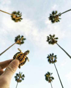 pictures of baby animals Little turtle takes on Hollywood, Los Angeles, California Cute Creatures, Beautiful Creatures, Animals Beautiful, Baby Sea Turtles, Cute Turtles, Ninja Turtles, Animals And Pets, Funny Animals, Turtle Love