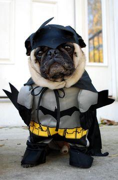 Bat Pug!