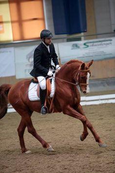 Pagur (Gepard x Pospa / Prikaz) 2007 Arabian Stallion