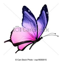 Stock Illustration - Color butterfly flying, isolated on white - stock illustration, royalty free illustrations, stock clip art icon, stock clipart icons, logo, line art, pictures, graphic, graphics, drawing, drawings, artwork