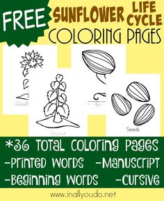 Sunflower Coloring Pages {freebie}