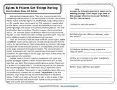 1000+ images about 5th grade on Pinterest | Comprehension ...