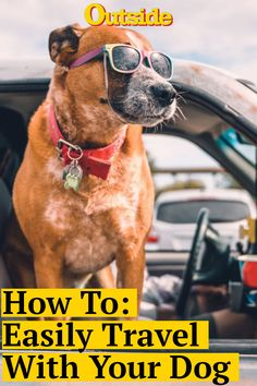 How to Make Traveling with Your Dog Easy Pet Travel, Travel Tips, Dog Friends, Best Friends, American Dog, Pet Dogs, Pets, Pet Gear, Pet Treats
